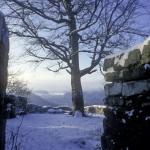 Winterstimmung auf Ruine Greifenstein