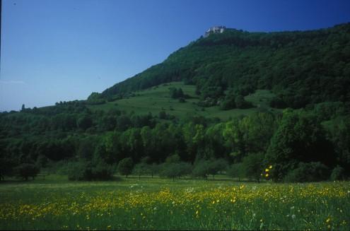 Neuffener Heide