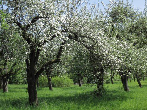 obstbaumwiesen-rohrer-weg